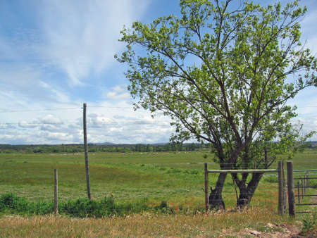 Rural landscape with tree and fence Stock Photo - 7381223