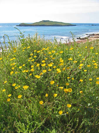 View of Pessegueiro island, in Porto Covo, Portugal, with flowers as foreground Stock Photo