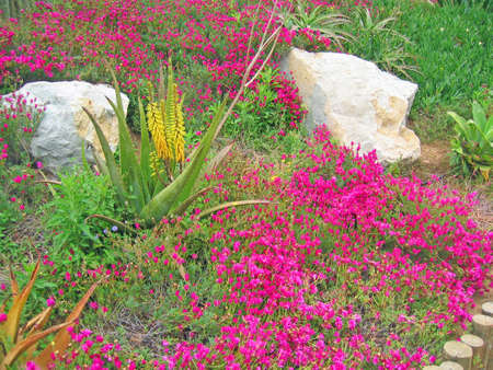 Interesting view of a field with Aloe Veras, pink flowers, white rocks and wooden fences