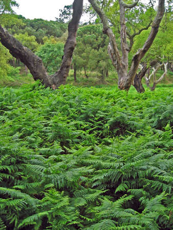 Woodland covered with ferns