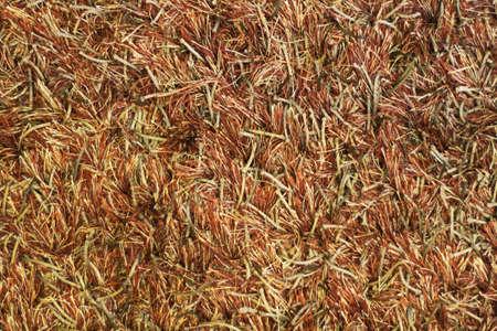 rug texture: Texture of an extremely furry rug, made of Polypropylene fiber Stock Photo