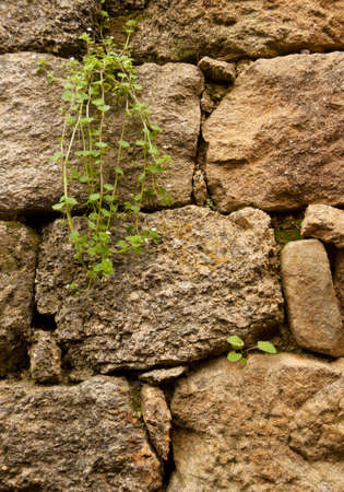 Ancient rock wall with plants Stock Photo