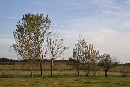 Rural scene with a varied tree row