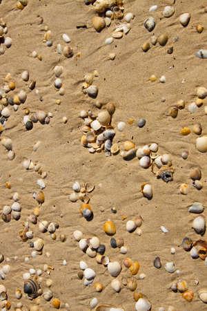 Small seashells over sand Stock Photo