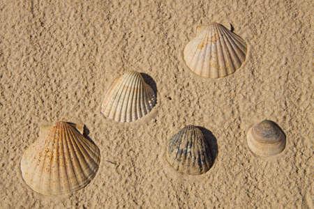 Seashells over sand Stock Photo