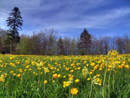 Lawn in spring,Serbia,Valjevo.
