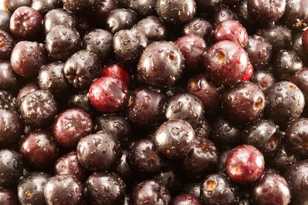 sorb: Closeup of wet aronia berries