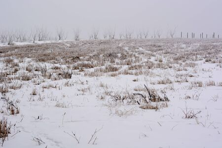 Frozen stubble under the snow cover Stock Photo