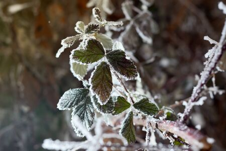 hoarfrost: Frozen branches covered with snow with blurred background Stock Photo