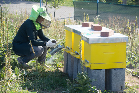 Female beekeeper checking a beehive to ensure health of the bee colony or collecting honey.