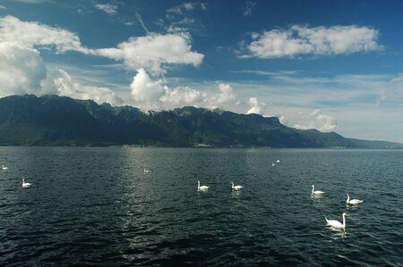 leman: Swans on Lac Leman