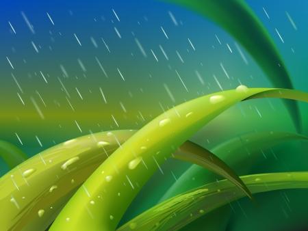 granizo: Mata de hierba verde entre las gotas de lluvia