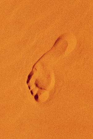 footsteps: footsteps in Sahara in Morocco near Merzouga