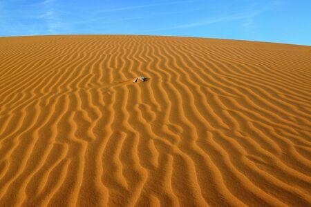 desierto del sahara: sand Sahara desert in Morocco near Mhamid