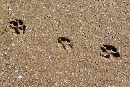 footstep: footstep in Sahara in Erg Chigaga desert Stock Photo