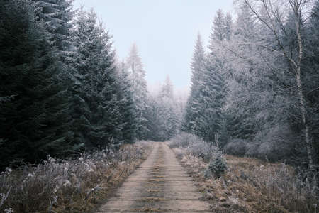 freezed nature in czech forest with trees