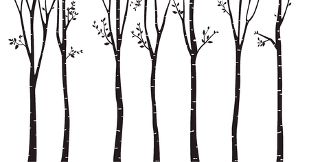 Birch Tree Silhouette Background