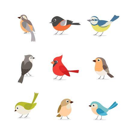 Set di uccelli colorati isolati su sfondo bianco