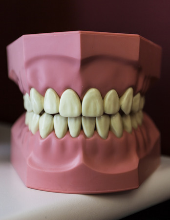 plastic dental reproduction photo