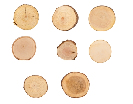 wood cross section: detailed sectional view of the tree (white background)