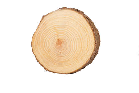 sectional: detailed sectional view of the tree (white background)
