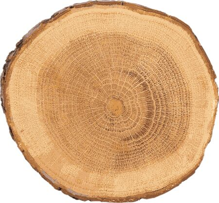 lumber: detailed sectional view of the tree (white background)