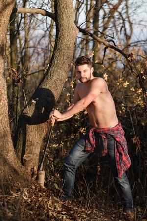 robust: Young, stylish lumberjack felling trees (autumn nature).