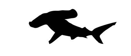 pez martillo: silueta de martillo sobre un fondo blanco
