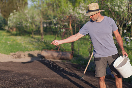 The gardener is laying out new grass. establishment of turf (Shallow DOF)