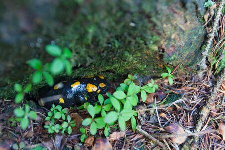 Closeup of a mushroom in nature.
