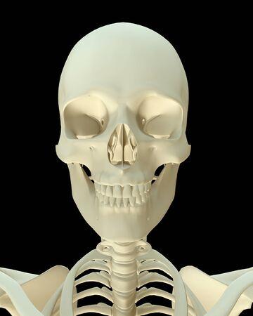 3D render- Human Skeleton Skull, body face bone isolated on black