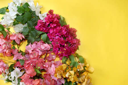 flowers frame, colorful bougainvillea spring flower background, greeting card with blank text space over on yellow, selective focus with blur. Imagens