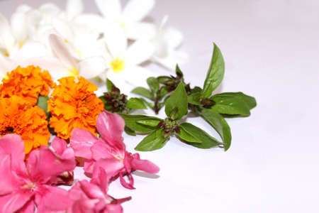 fresh medicinal herbs and culinary herbs, leaves, berries, plant, flowers - collection on white background