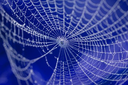 arachnoid: spider on web covered by water drops Stock Photo