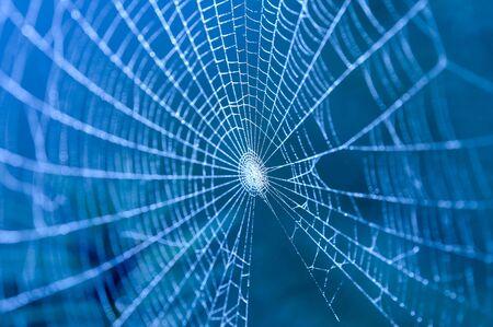arachnoid: Web coperti da gocce d'acqua (attenzione selettiva)