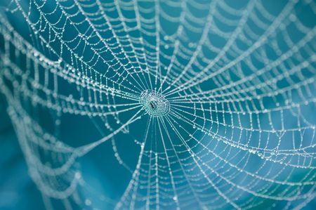 arachnoid: ragno sul sito coperti da gocce d'acqua Archivio Fotografico