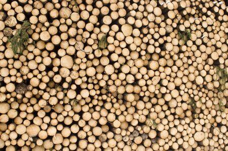 madera - cortar los troncos de los �rboles Foto de archivo - 3051199