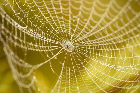 arachnoid: ragno sul web coperti da gocce d'acqua