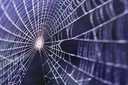 arachnoid: Web coperti da gocce d'acqua Archivio Fotografico