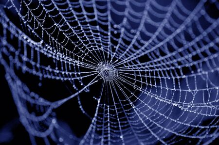 spiders: spider on web covered by water drops Stock Photo