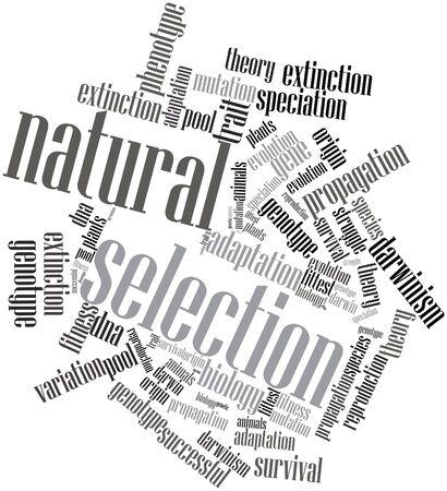 origen animal: Nube palabra abstracta por selección natural con etiquetas y términos relacionados Foto de archivo