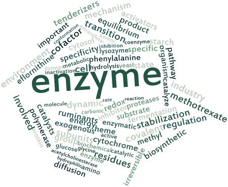 enzyme: Abstract word cloud for Enzyme with related tags and terms Stock Photo