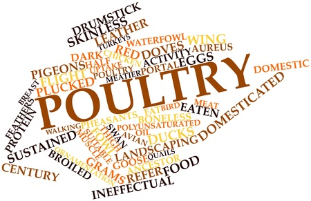 chiefly: Abstract word cloud for Poultry with related tags and terms