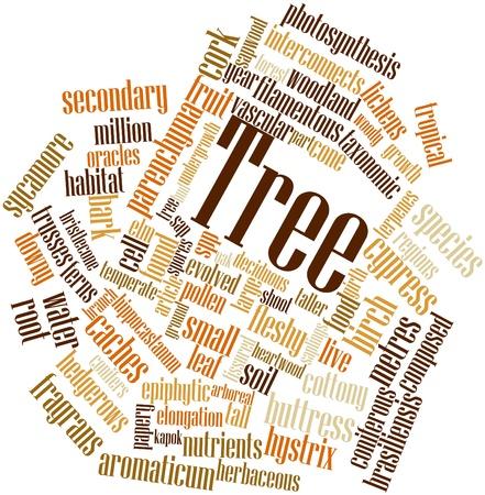 duramen: Nube palabra abstracta para Árbol con etiquetas y términos relacionados