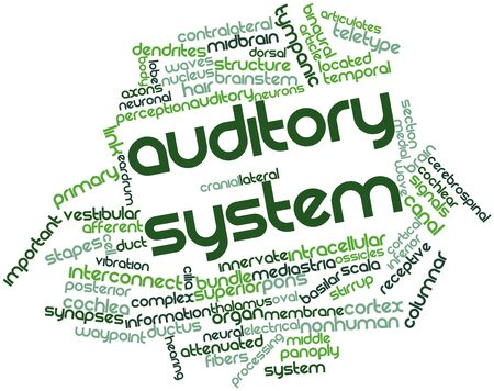 auditory: Abstract word cloud for Auditory system with related tags and terms Stock Photo