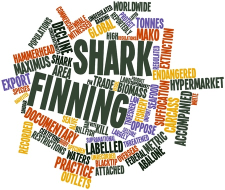 labelled: Abstract word cloud for Shark finning with related tags and terms