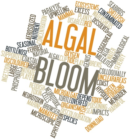 originate: Abstract word cloud for Algal bloom with related tags and terms Stock Photo