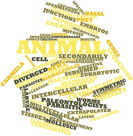 animal related: Abstract word cloud for Animal with related tags and terms Stock Photo