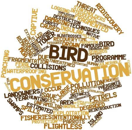instances: Word cloud astratto per la conservazione degli uccelli con tag correlati e termini