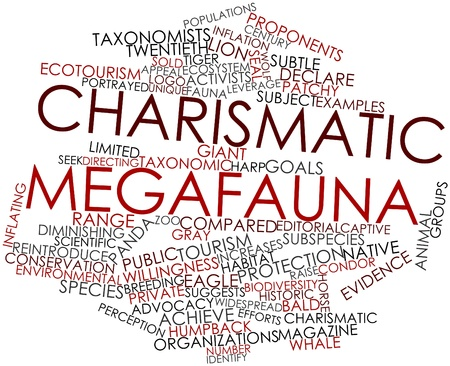 Abstract word cloud for Charismatic megafauna with related tags and terms Stock Photo - 16498758